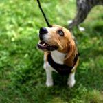 Dlaczego warto kupić posłanie dla psa?