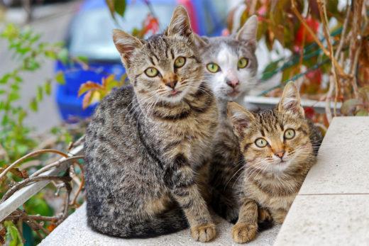 Umaszczenie kota - co trzeba wiedzieć?