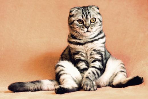 Kocur czy kotka - czy różnią się zachowaniem?