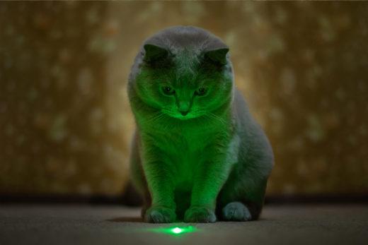 Czy powinno się zatem bawić z kotem laserem?