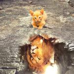Sennik kot - co oznacza?
