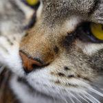 Koci nos - jaki powinien być?