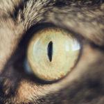 Błona na oczach kota - do czego jest potrzebna?