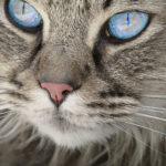 Wibrysy dlaczego kot ich potrzebuje