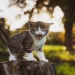 Kot gubi sierść - dlaczego?