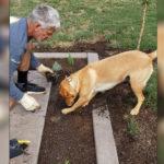 Psiak pomaga opiekunowi sadzić rośliny