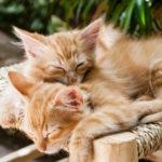 Ile śpi kot?
