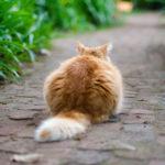 Koci ogon - co warto o nim wiedzieć?