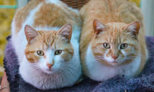 Dwa koty w domu - czy warto?