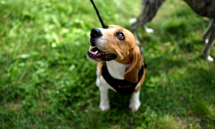 Podkłady higieniczne dla psa