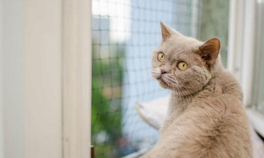 Zabezpieczenie okien kot - jak najlepiej zabezpieczyć?