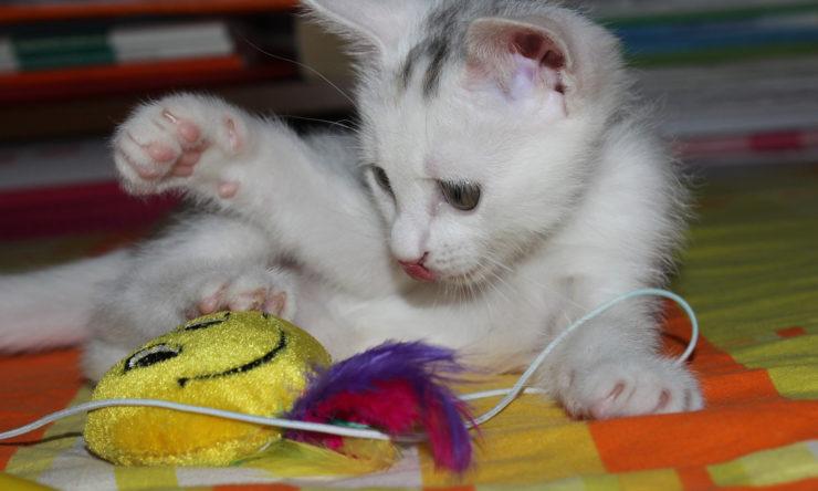 Jak zrobić zabawkę dla kota?