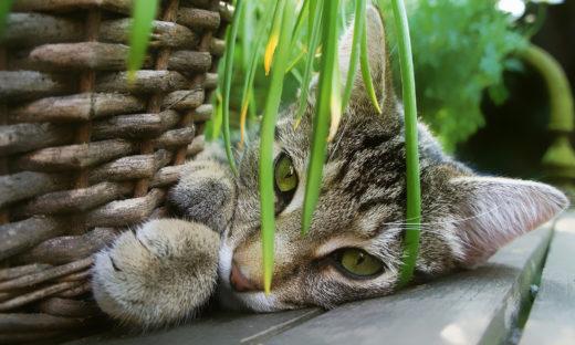 Rośliny bezpieczne dla kota