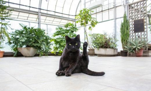 Rośliny trujące dla kotów