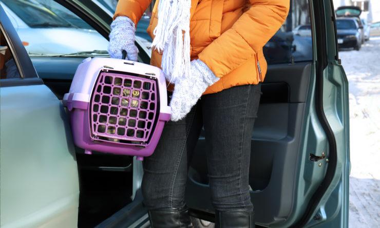 Jak przyzwyczaić kota do transportera?