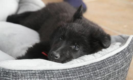 Co powinno znaleźć się w wyprawce dla psa?