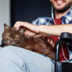 Terapia z kotem - kiedy warto ją zastosować?