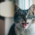 Cukrzyca u kotów - skąd się bierze?