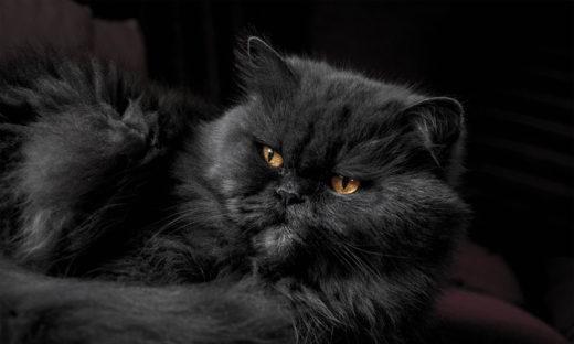 Czarny kot - symbolika