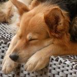 Hotele dla psów - czym kierować się przy wyborze hotelu dla pupila.