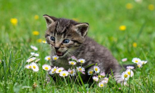 Imię dla kotki - jak wybrać?