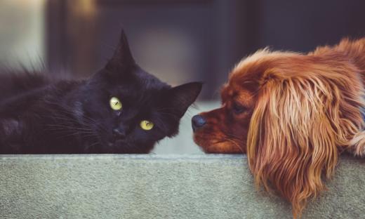 pies-kot-przyjaźń