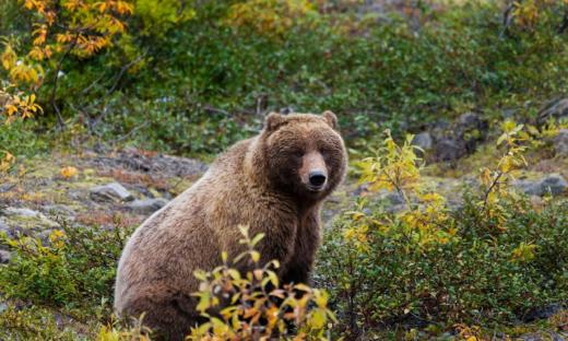 niedźwiedź-blisko-ludzi