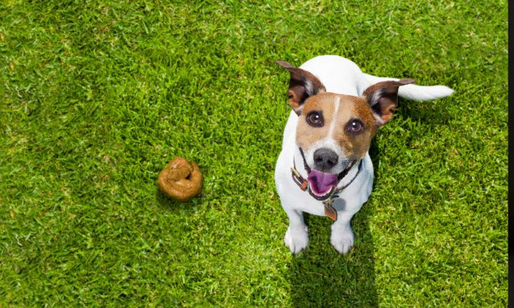 Jak powinna wyglądać psia kupa?
