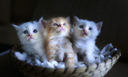 Dlaczego małe kotki są takie urocze?