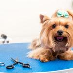Strzyżenie psa - czy jest koniecznie?