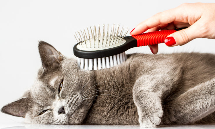 Szczotka dla kota - czym się kierować przy zakupie?