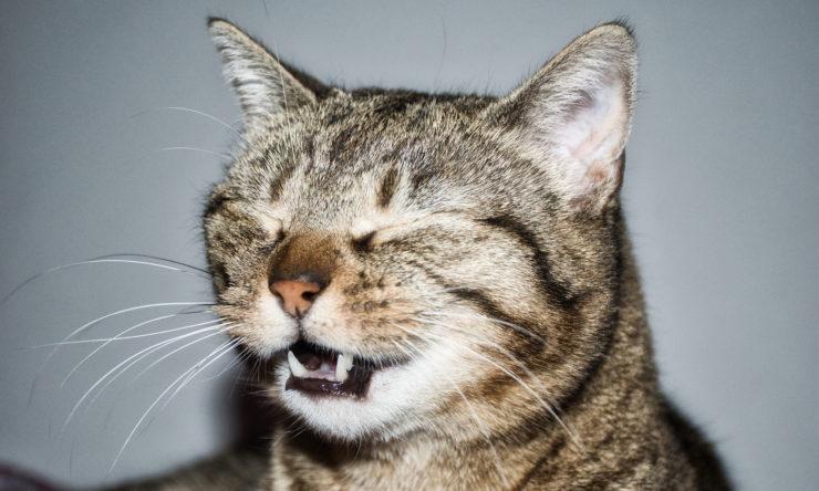 Co robić, kiedy kot kicha