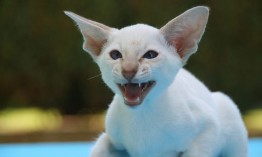 Ugryzienie kota - czy może być groźne?